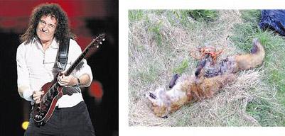 Brian May  |  Dead Fox